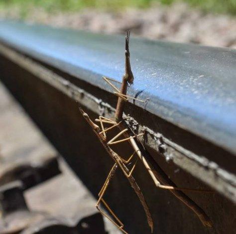 amigos nos trilhos do trem de guaporé a muçum