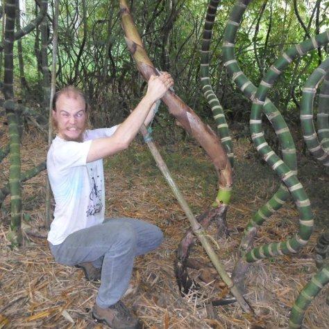 71 tecnica de curvar bambu