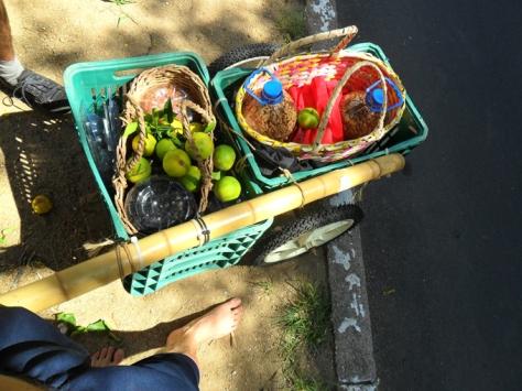frutas-e-frutos