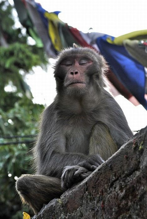 meditating_monkeys_21