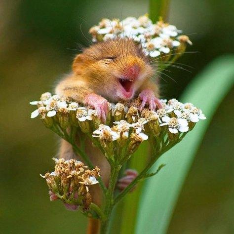animal hamster curtindo a vida, numa boa